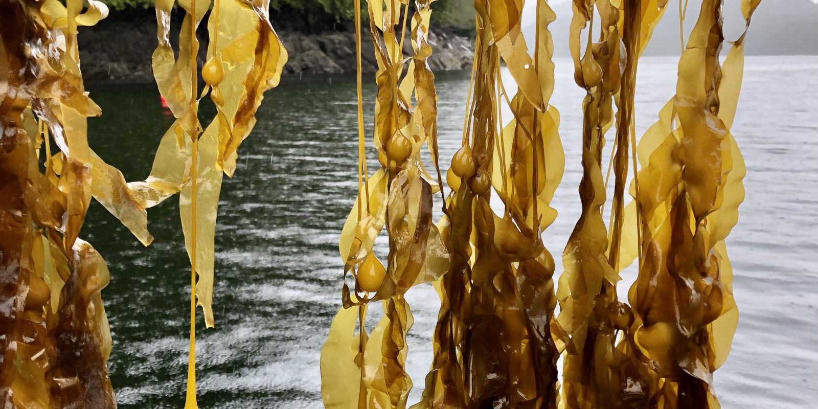 seaweed_page_6